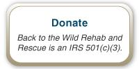 Donate to Back To The Wild Rescue & Rehab